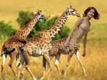 queen of giraffes