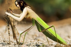 female praying mantiss