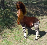 longhaired okapi girl
