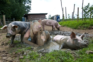 piggirl wallowing in the mud on a summers day